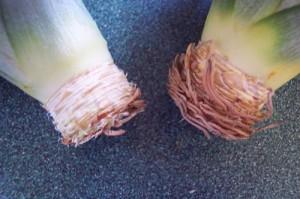 Шаг 2-подготовка верхушки. Подсушиваем верхушку ананаса